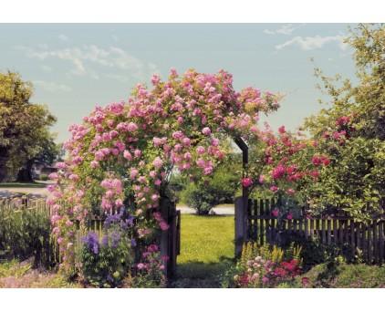 """8-936 Фотообои Komar """"Rose Garden"""""""